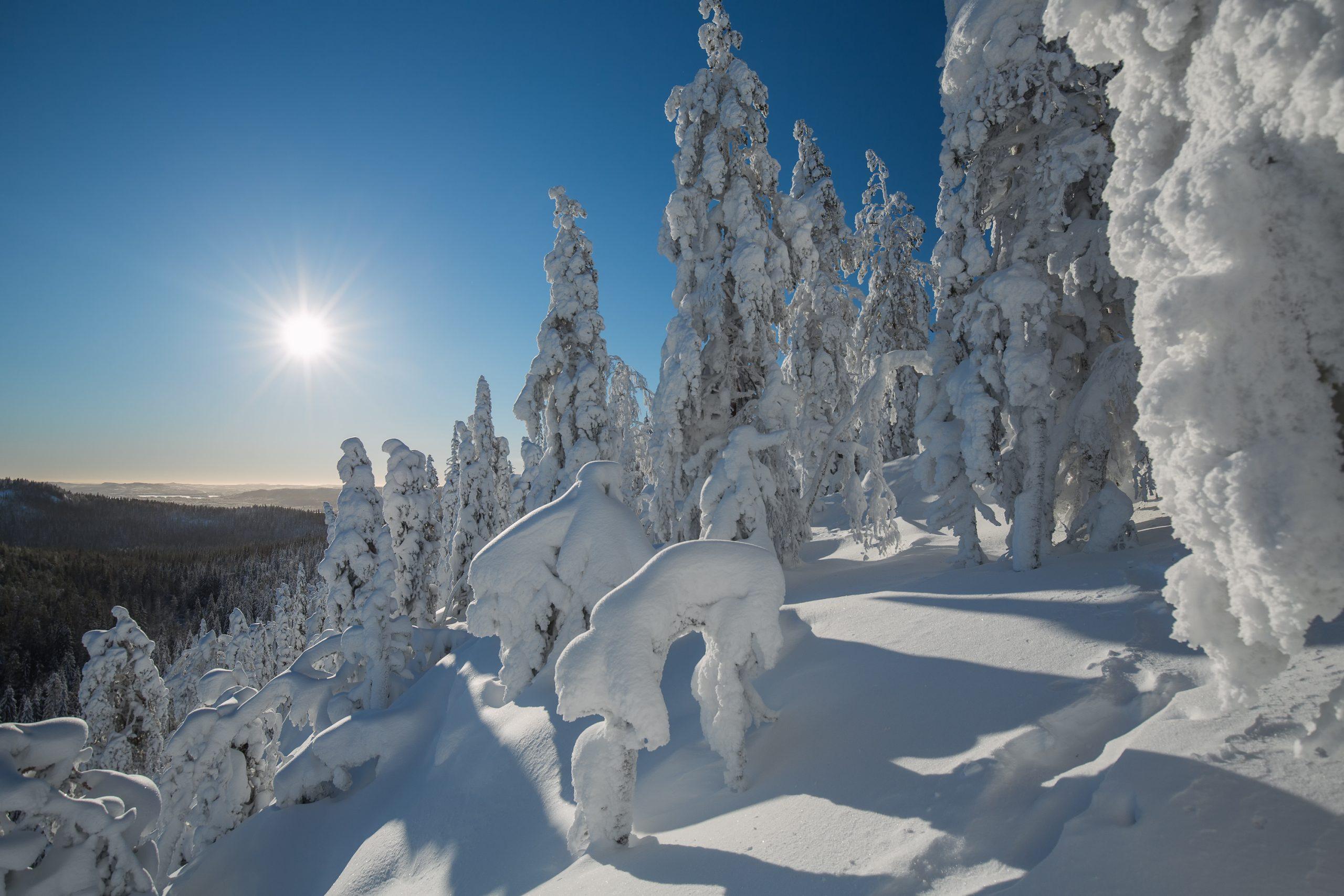 ©Juha Saastamoinen - stock.adobe.com